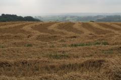 Baneheide-Vergezicht-met-gemaaid-korenveld-1