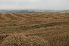 Baneheide-Vergezicht-met-gemaaid-korenveld-2