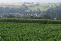 Eyserheide-Vergezicht-met-bieten-en-maïsveld