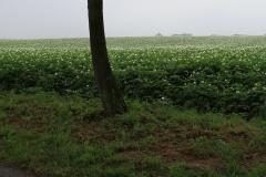 Puth-Windraak-030-Aardappelveld