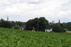 Rondom-Kanne-087-Vergezicht-met-bietenveld-en-Maastricht