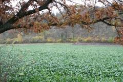 Strucht-Gerendal-127-Herfstlandschap-met-bieten