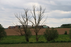 Voerendaal-111-Landschap-met-varkensboerderij