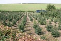 Ubachsberg-043-Kerstbomenplantage