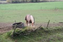 Engwegen-Keutenberg-Sousberg-013-Een-bedekt-paard-bij-een-drinkbak