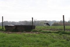 Engwegen-Keutenberg-Sousberg-035-Drinkbak