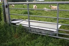 Eyserheide-Drinkbakken-in-schapenwei