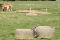 Klimmen-Termaar-044-Twee-paarden-en-twee-drinkbakken