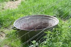 Ransdaal-104-Oude-wasteil-gebruikt-als-drinkbak-voor-vee