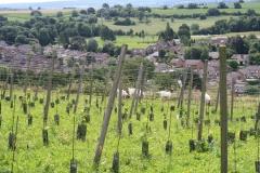 Trintelen-Eys-250-Beginnende-wijngaard