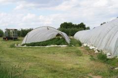 Hulsberg-0053-Plastic-tunnels-met-aardbeien-in-Aalbeek