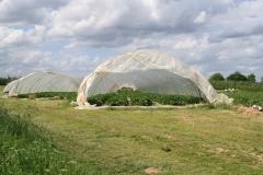 Hulsberg-0057-Plastic-tunnels-met-aardbeien-in-Aalbeek