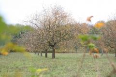 Strucht-Gerendal-123-Herfstlandschap-met-appelbomen