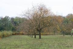 Strucht-Gerendal-124-Herfstlandschap-met-appelbomen