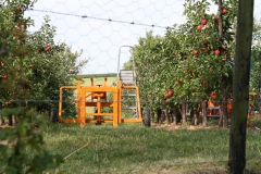 Ubachsberg-049-Appels-oogsten