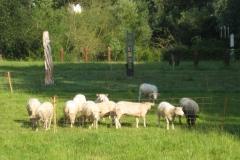 Eben-Emael-005-Beeldhouwwerken-in-weiland-met-schapen