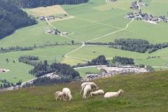 Neukirchen-049-Berglandschap-met-schapen