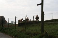 Engwegen-Keutenberg-Sousberg-010-Drie-paarden