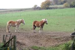 Engwegen-Keutenberg-Sousberg-014-Twee-paarden