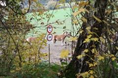 Engwegen-Keutenberg-Sousberg-015-Twee-paarden-verdekt-opgesteld