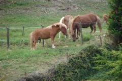 Eys-Ponys-1