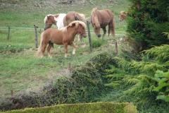 Eys-Ponys-2