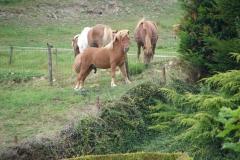 Eys-Ponys-4