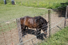 Geulle-069-Zwarte-pony