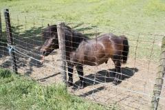 Geulle-070-Zwarte-pony