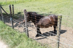 Geulle-071-Zwarte-pony