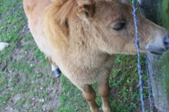 Huls-e.o.-155-Pony