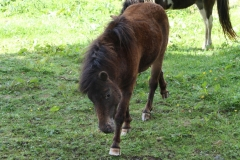 Huls-e.o.-166-Ponys
