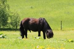 Hulsberg-0028-Pony