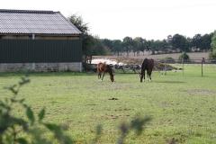 Hulsberg-006-Paard-en-veulen