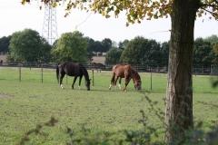 Hulsberg-008-Paarden