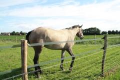 Hulsberg-Arensgenhout-003-Grijs-Paard