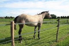 Hulsberg-Arensgenhout-004-Grijs-Paard