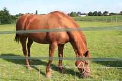 Hulsberg-Arensgenhout-005-Paard-Vos