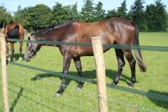 Hulsberg-Arensgenhout-006-Paard