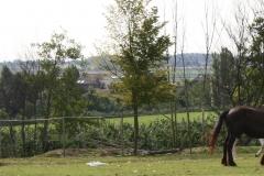 Klimmen-Walem-024-Paarden