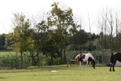 Klimmen-Walem-025-Paarden