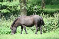Landgraaf-044-Pony
