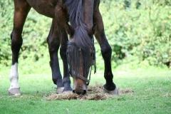 Landgraaf-045-Paard-met-vliegengordijn