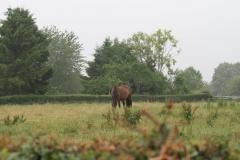 Puth-Windraak-006-Paard