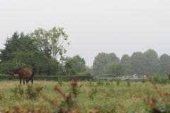 Puth-Windraak-007-Paarden
