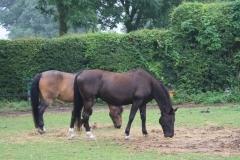 Puth-Windraak-008-Paarden