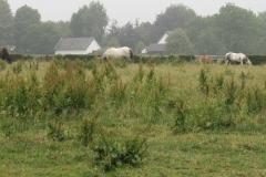 Puth-Windraak-009-Paarden