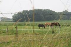 Puth-Windraak-103-Paarden-en-pony