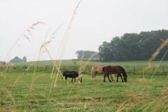 Puth-Windraak-104-Paarden-en-pony