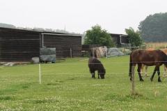 Puth-Windraak-105-Paarden-en-pony